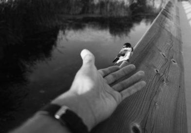 Wie einem Vogel die Hand hinhalten