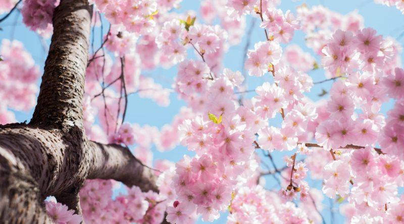 Ostern, Frühling, Corona, Hoffnung.